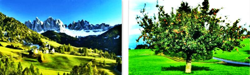 苹果干细胞页面图片-2.jpg